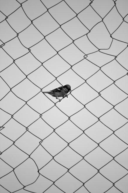 avian-bird-black-and-white-1813806